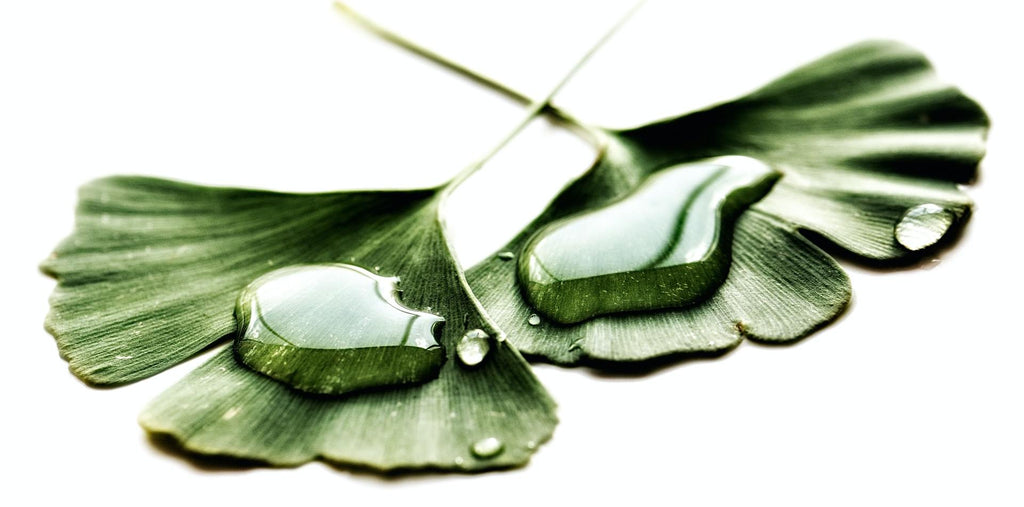 Ginkgo leaf as a supplement