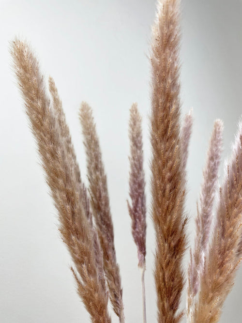 Close up natural mini pampas grass by Calabasas