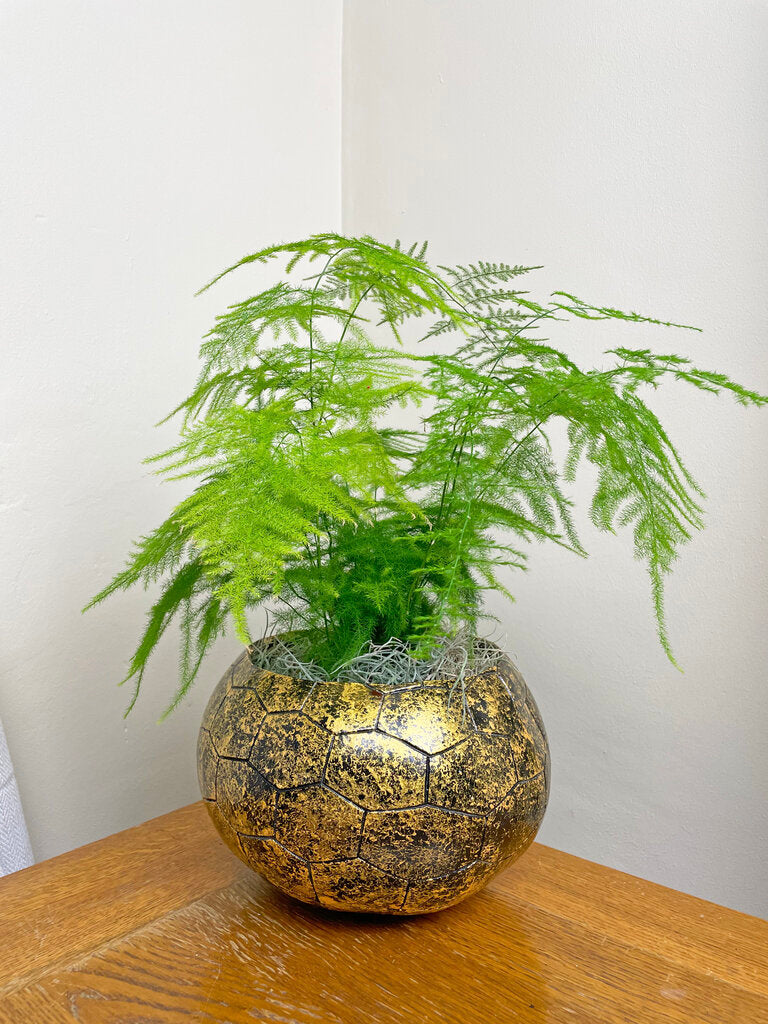 Gold calabash plant pot with green plant