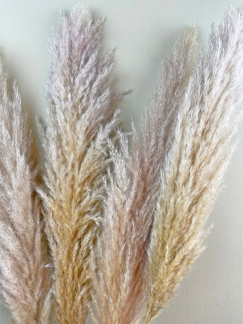 Close up fluffy grey pampas grass by Calabasas