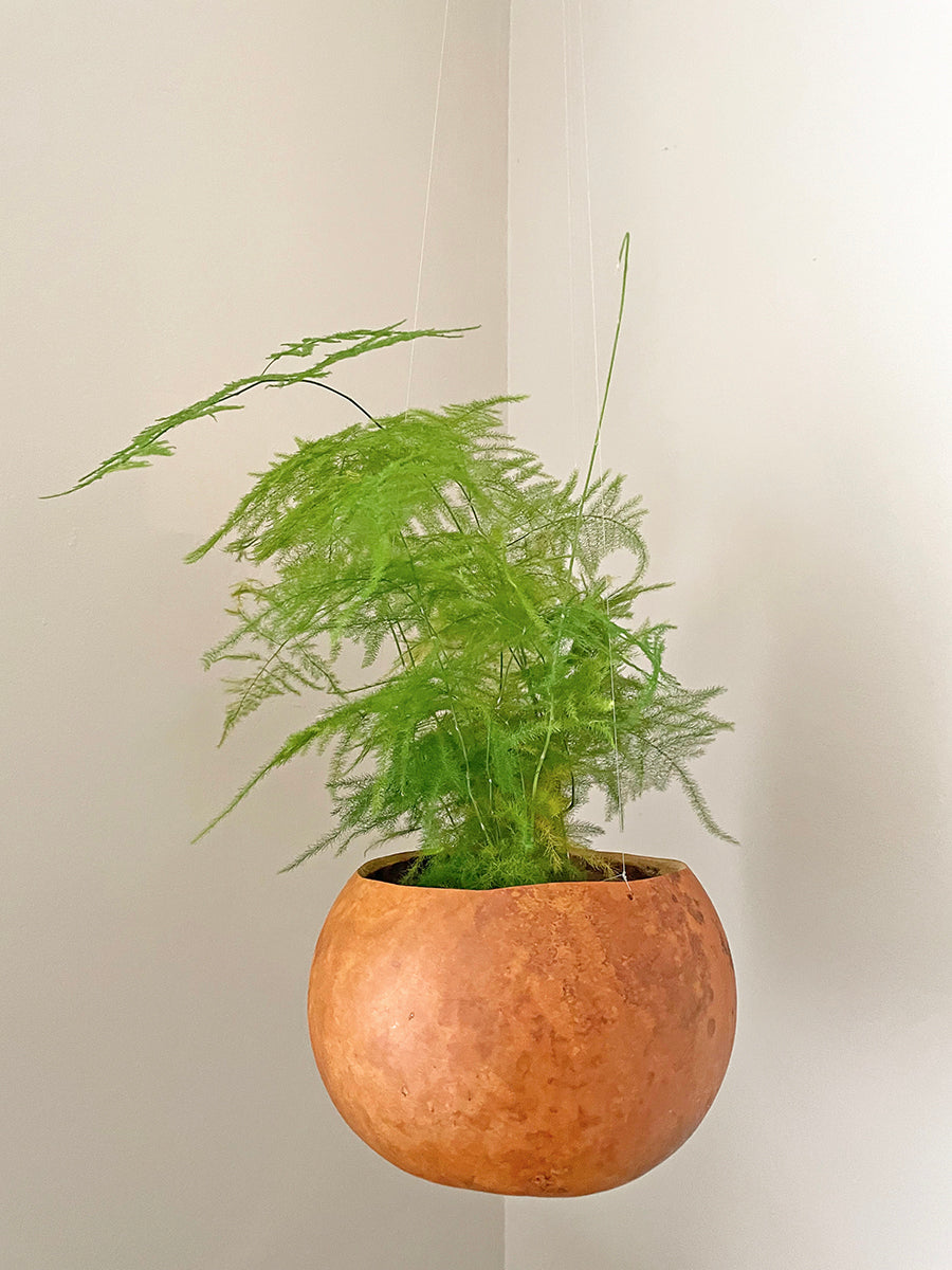 Natural calabash hanging plant pot with green fern