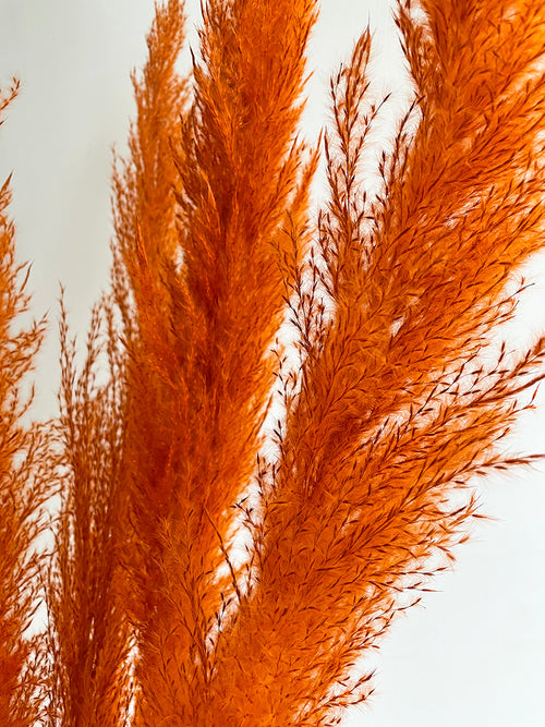 Orange pampas grass close up by Calabasas