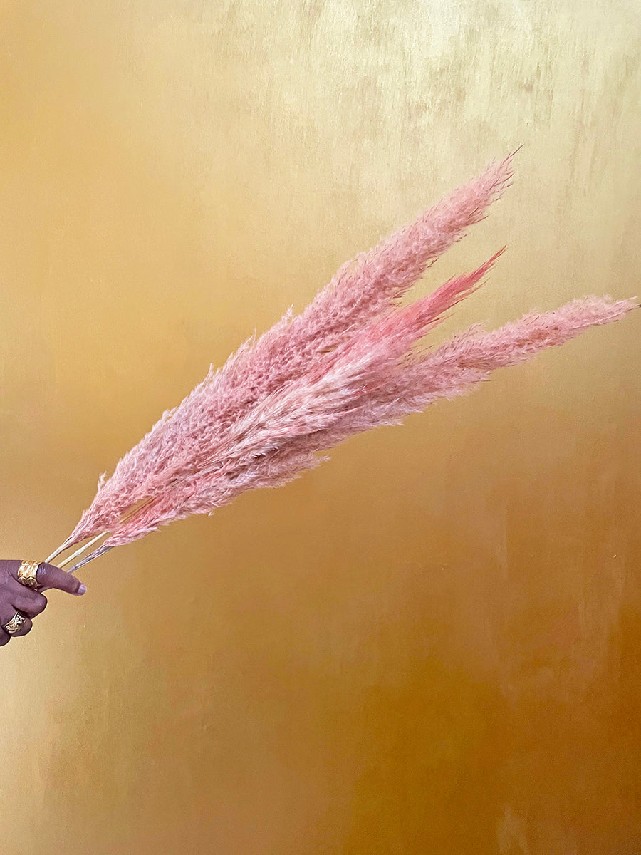 Pink pampas grass by Calabasas against gold wall