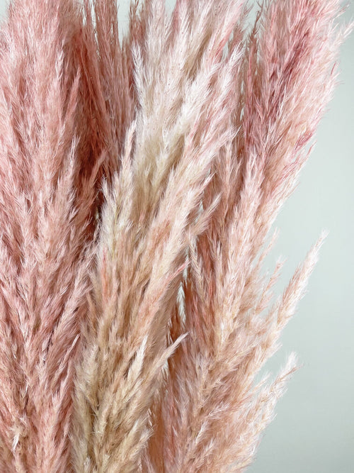Pink pampas grass close up by Calabasas