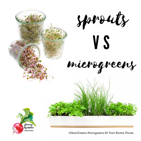 should you grow sprouts or microgreens