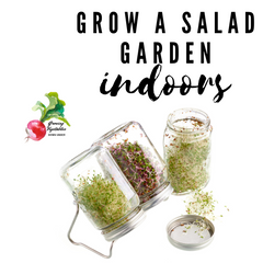grow vegetables indoors sprouts