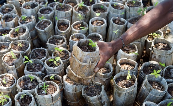Close up of African woman putting seedlings in the ground.