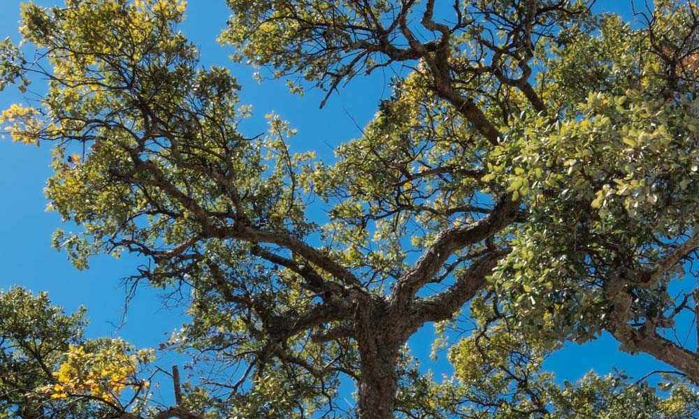 Green trees and blue skies in Portugal are meant to symbolize reforestation.