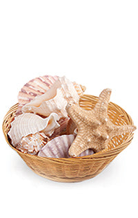 Seashell Power for Psychic Connection to Water & Healing