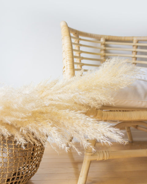 Learn how to care for dried pampas grass