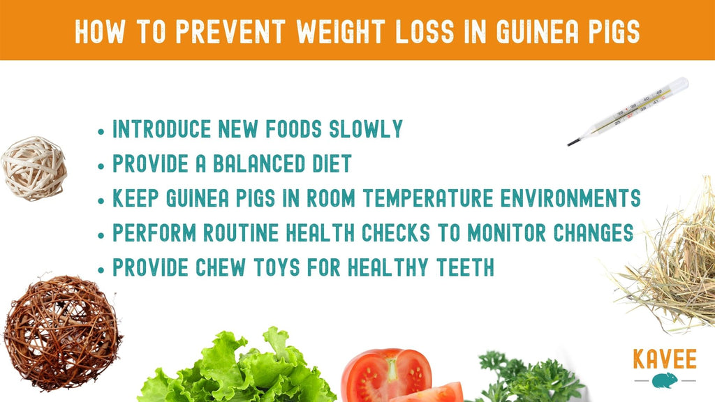 How can I prevent my guinea pig from losing weight? quick reference guide to help a thin guinea pig