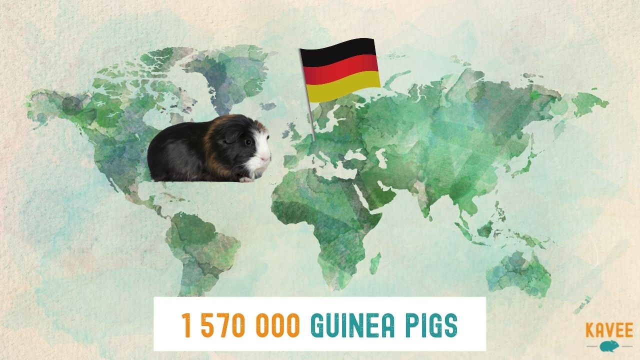 Number of guinea pigs in Germany with a picture of a guinea pig sat on a world map with a German flag