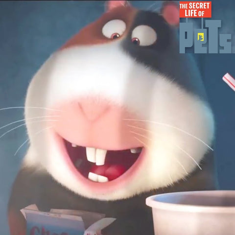 The secret life of pets movie norman the guinea pig
