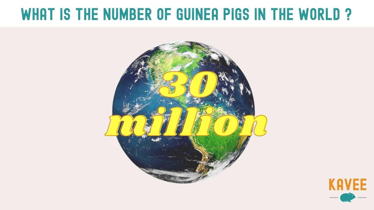 30 million guinea pigs are around the world calculation article