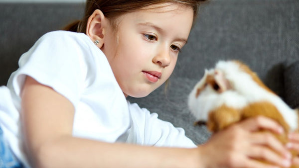 teaching young children how to safely play with their guinea pig or small pets