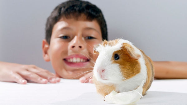 how to teach older children to bond and interact with guinea pigs and other small pets