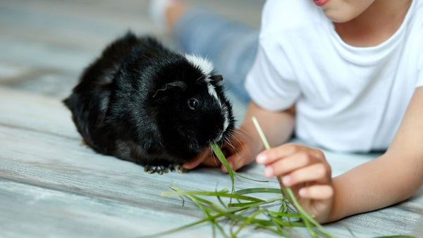 do not leave young children unattended when they are feeding food snacks or treats to small pets