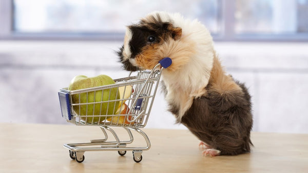 guinea pig pushing a miniature shopping trolley filled with sliced apples