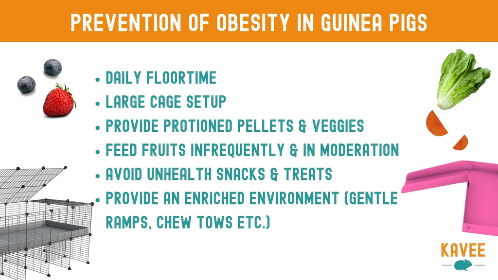 How can I stop my guinea pig getting fat? tips to help prevent obesity in guinea pigs quick reference chart guide