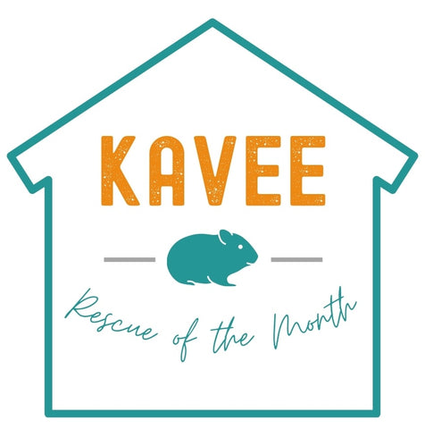 Rescue of the Month for guinea pig shelters kavee blog usa