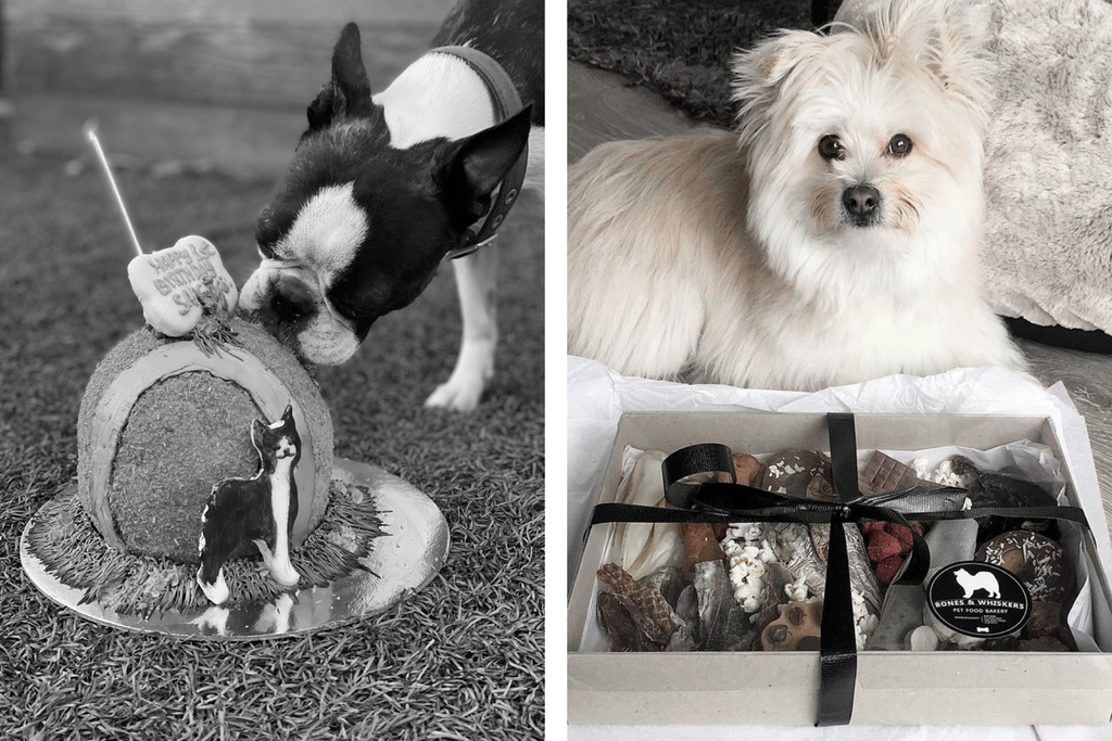 Bourke St. the Label - Mother's Day Gift Guide - Bakeries for Dogs