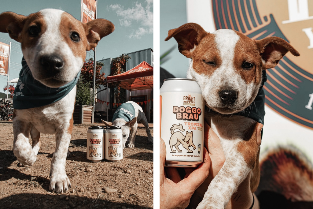 Bourke St. the Label - Dog Friendly Breweries - Bright Brewery