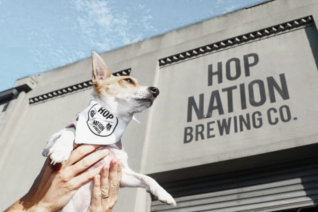 Bourke St. the Label - Dog Friendly Breweries - Hop Nation Brewing Co.