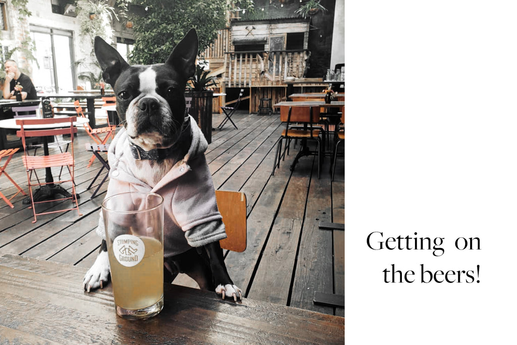 Bourke St. the Label - Dog Friendly Pubs - Stomping Ground Collingwood