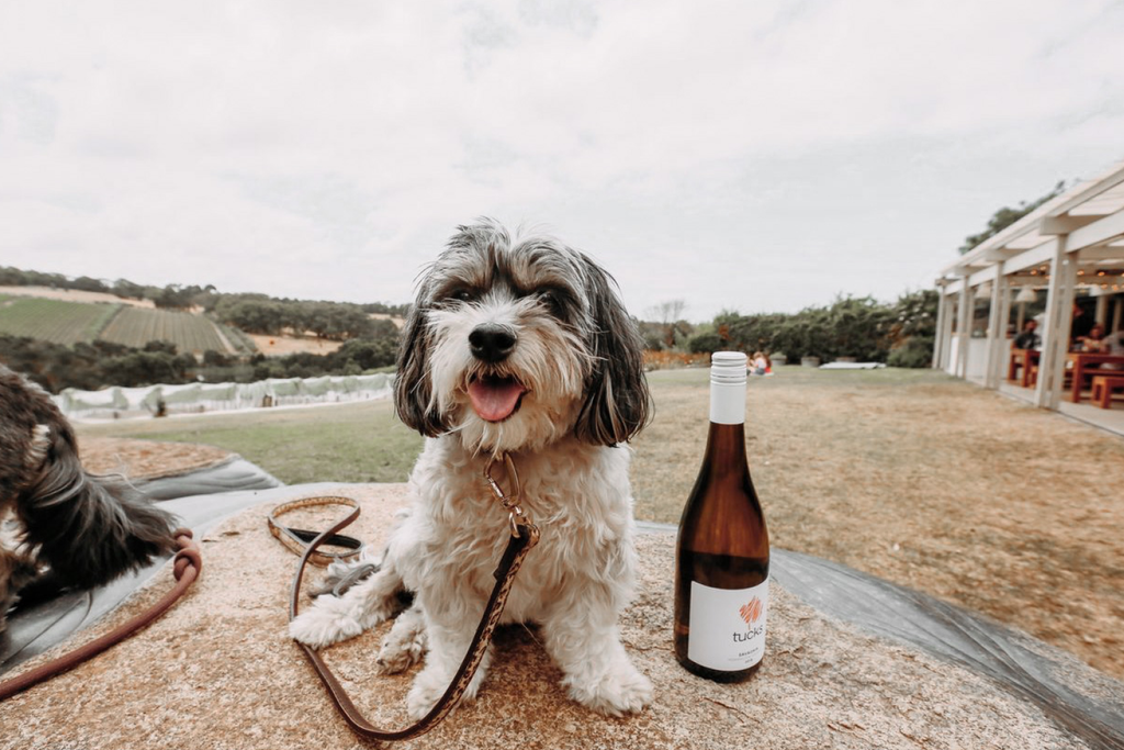Bourke St. the Label - Father's Day Dog Dad Gift Guide - Tuck's Wine