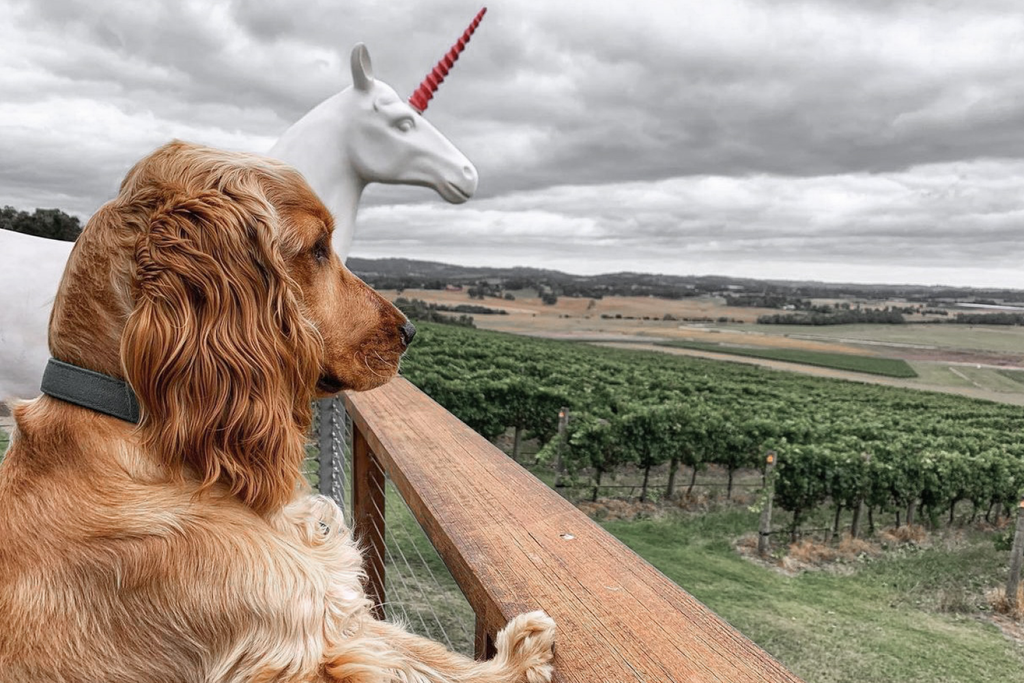 Bourke St. the Label - Dog Friendly Wineries - Helen and Joey Estate