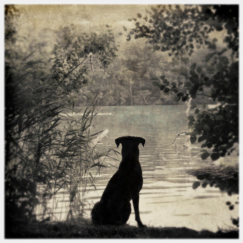 Fine art painterly black and white photograph of black dog by lake in Berlin, Germany, surrounded  by trees and foliage