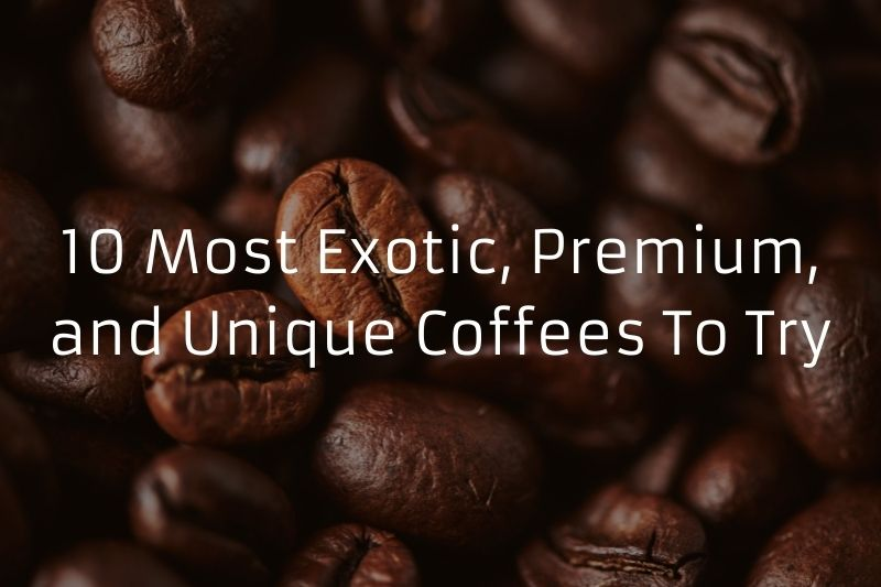 10 Most Exotic, Premium, and Unique Coffees To Try