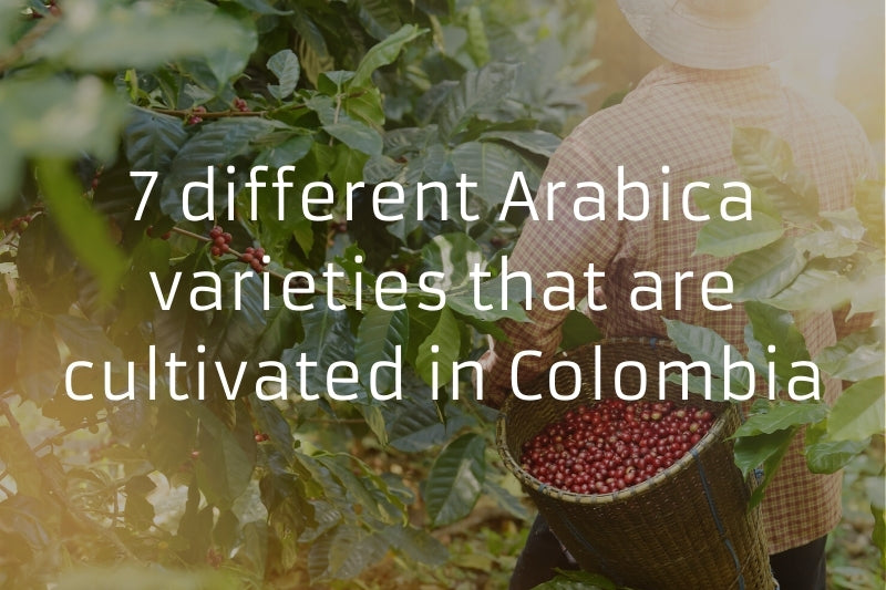 7 different Arabica varieties that are cultivated in Colombia