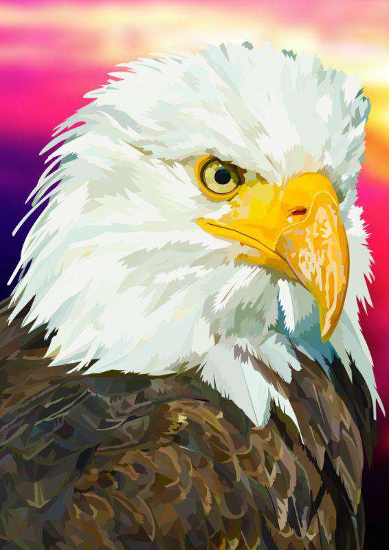 American White Tailed Eagle