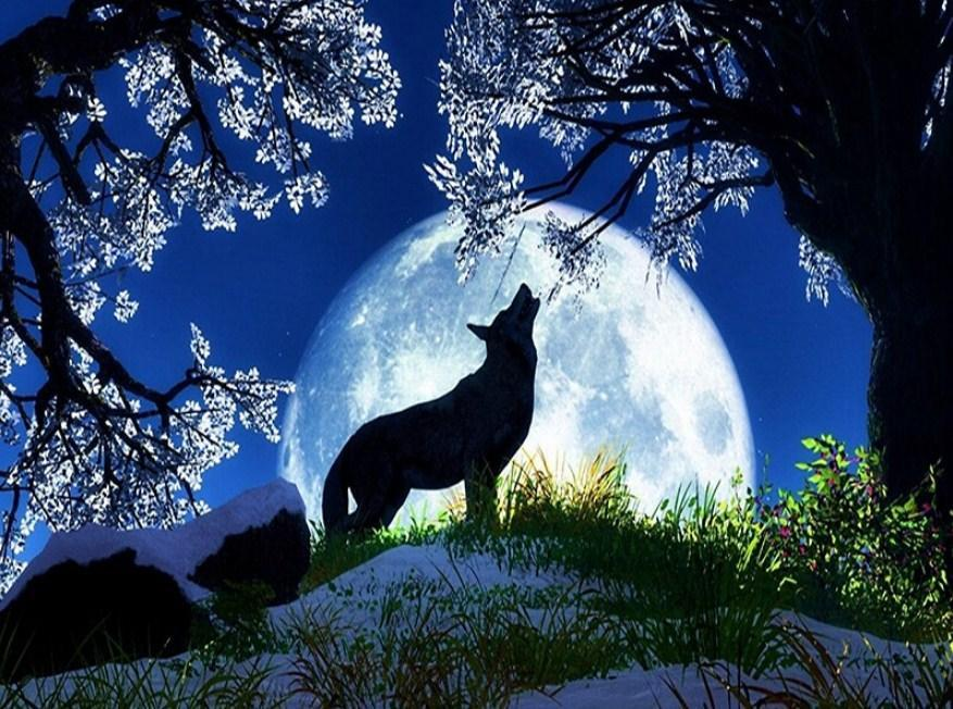 Wolf Silhouette in Moonlight