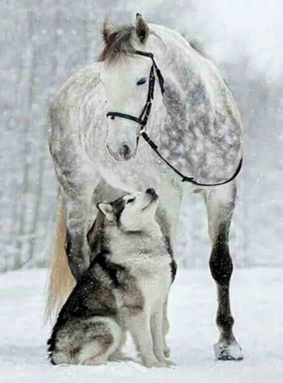 Wolf and Horse in Snow