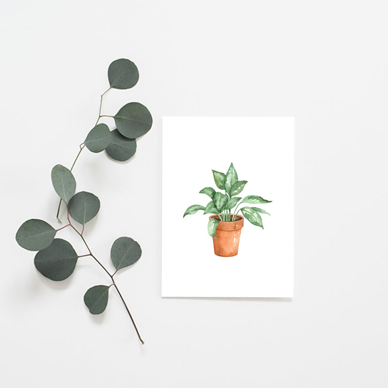Terracotta Potted Plant