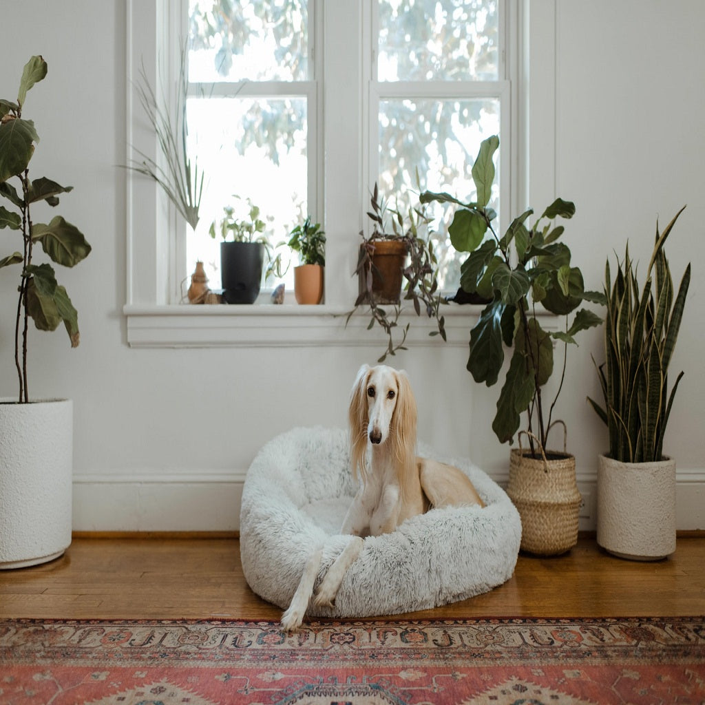 Buy Anxiety Pet Bed