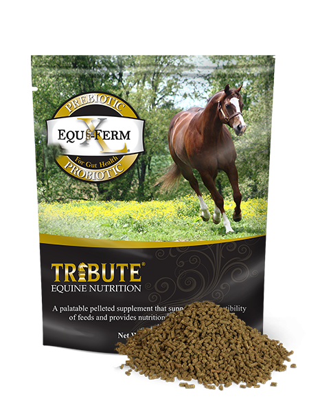 Tribute Equi-Ferm XL (7.5 lb)
