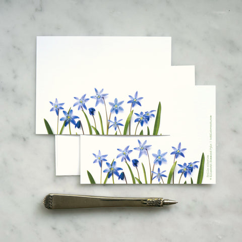 Flat card set - Blue scilla flowers