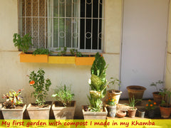 Homegarden with khamba compost