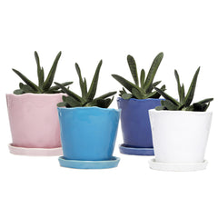 Chive Big Tika - Mixed Bundle of four ceramic large pots with saucer and drainage hole