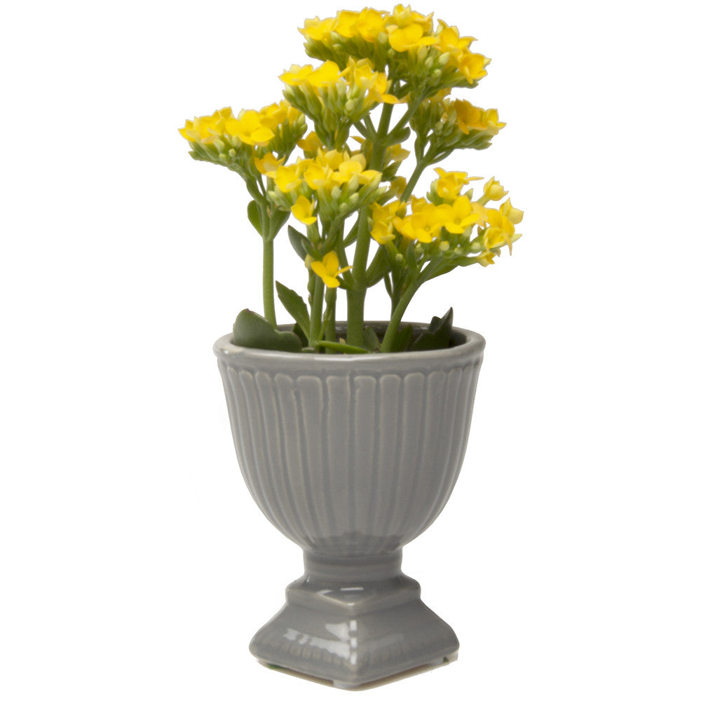 Chive Brilliant - Large Grey Ceramic Potted Planter
