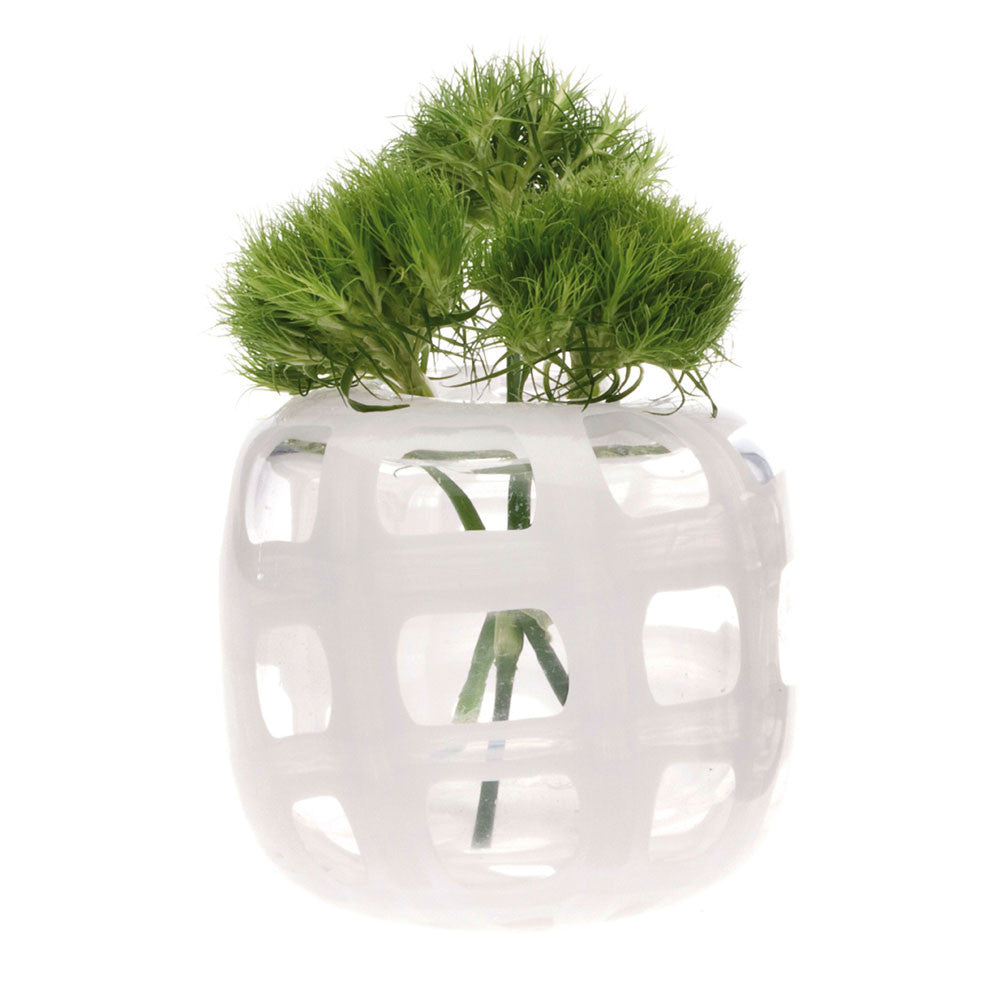 Chive, Black and White - Vase White glass wide mouth  short flower vase