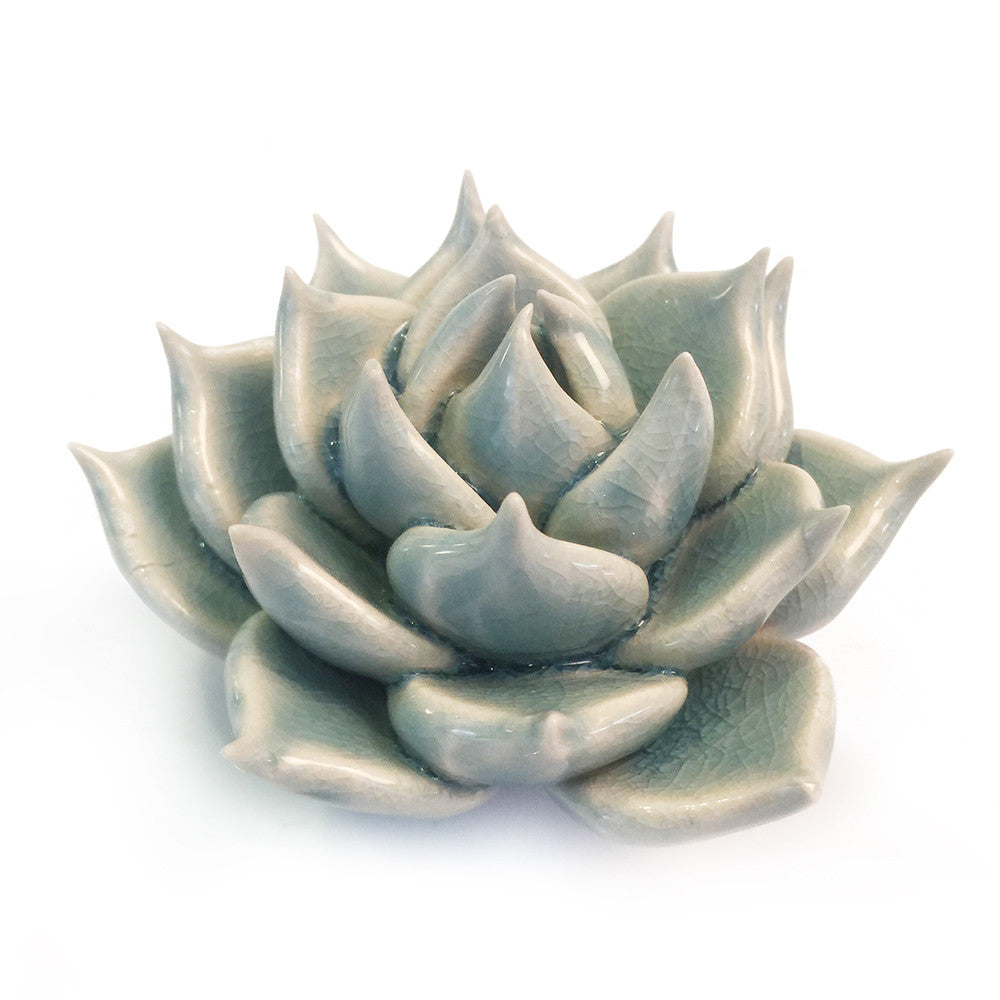 Chive Coral 2 - Succulent Light Blue, Ceramic Decorative Floral Accessory