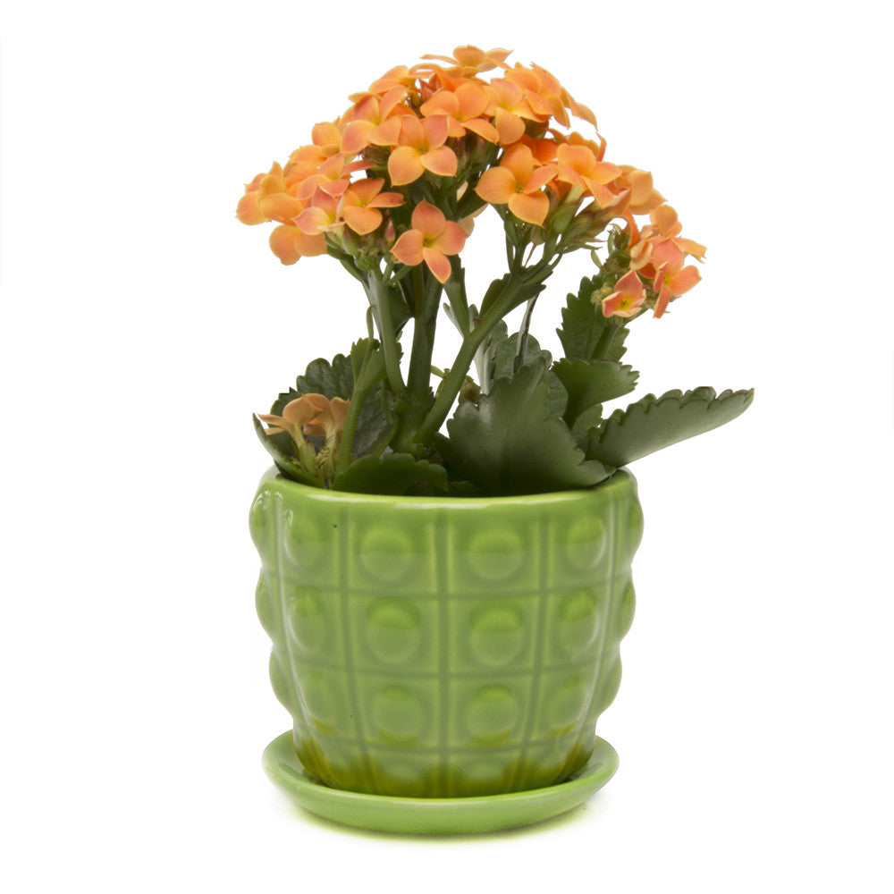 Convex Planter - Green