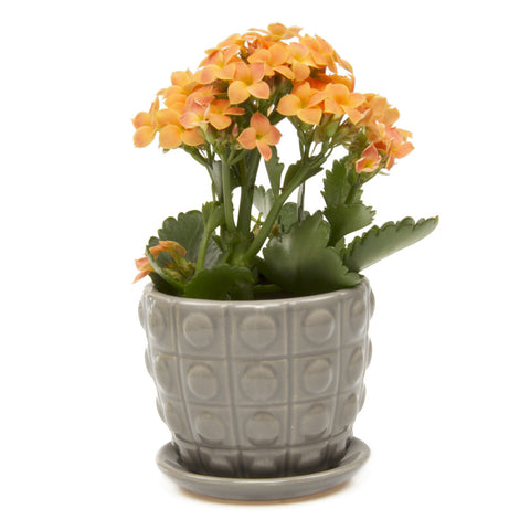 Convex Planter - Medium Grey