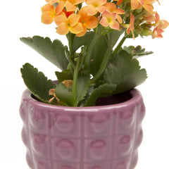 Convex Planter - Purple