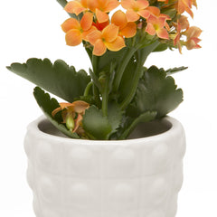 Convex Planter - White