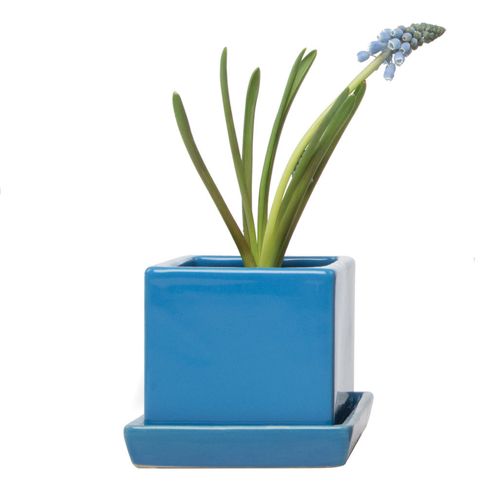 Chive, Cube and Saucer - Azure Blue Ceramic Planter with saucer